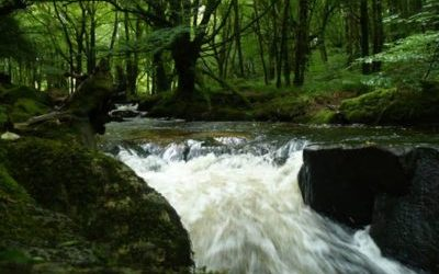 Goliath Falls